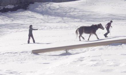 C'est aussi ça, la Suisse du snowboard